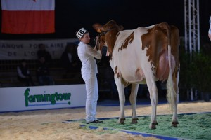 Fhm Helise, Championne Red Holstein