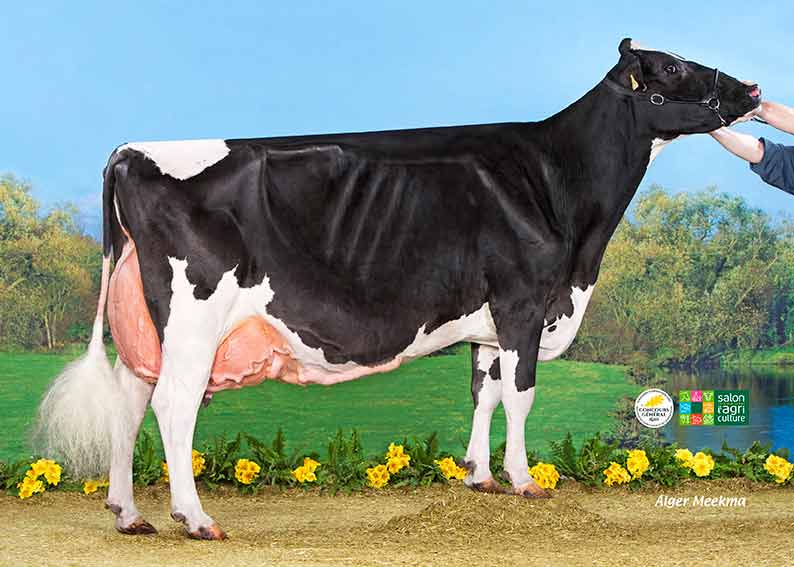 Palmar s concours g n ral agricole 2016 prim holstein france - Salon del agriculture ...