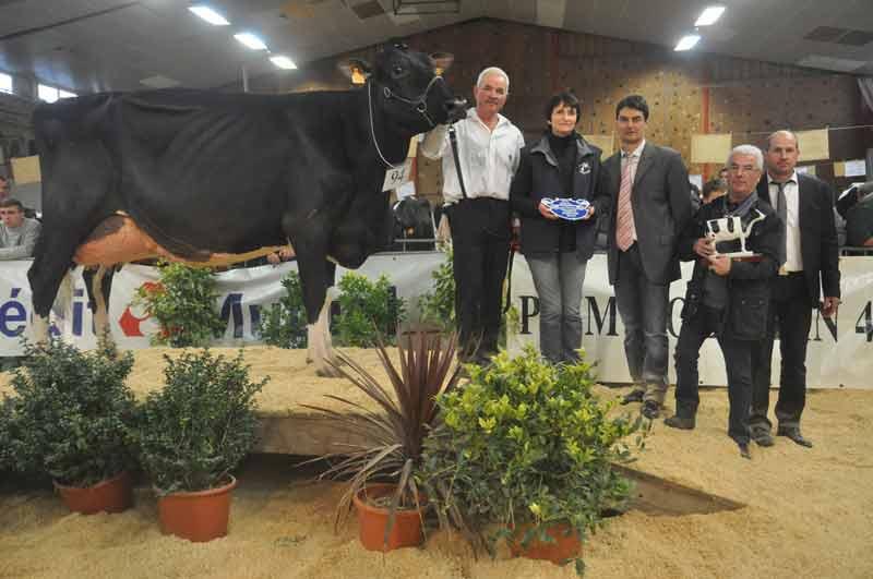 Championne Adulte, Galfa-Vray (Minister x Jasper) au GAEC Vray-Holstein
