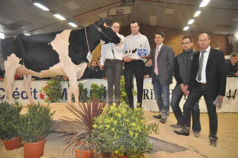 Championne Espoir, Javelle and cow (Gabino x Berryhill) au GAEC du Moulin and cow