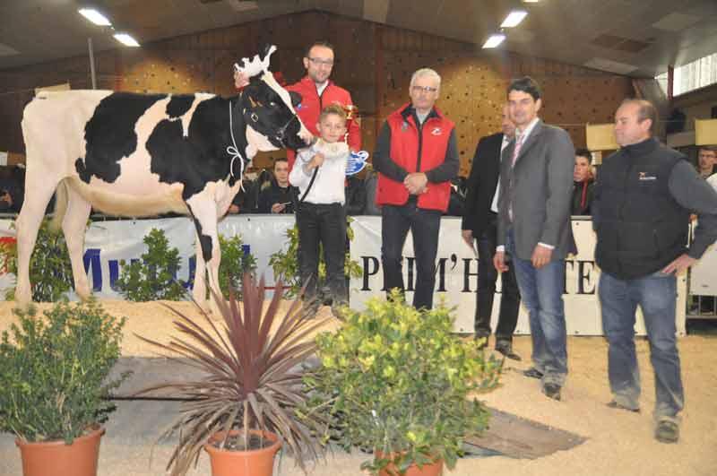 Championne Génisse, l'ami des bois Linda (Sammy x Talent) à Alain Migot