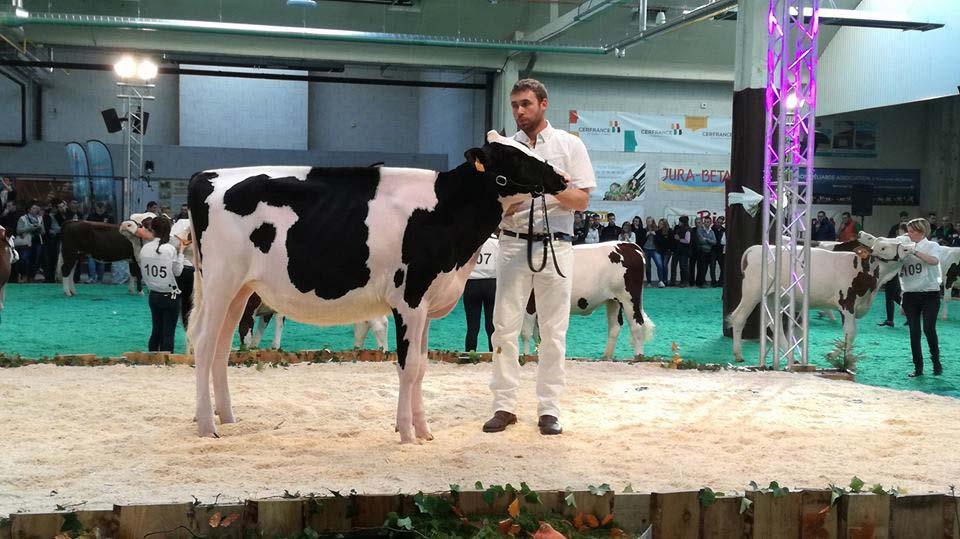 Championne Junior Holstein : Jld Miss Rochard (Gold Chip X Damion) - Elevage Le Bois Brillant et JL Demas (49)