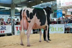 EXPO TARBES 2017, Réserve Grande Championne et Meilleure mamelle Jeune