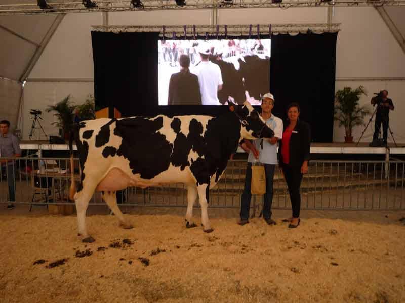 Championne vaches âgées GUINESS, GAEC LEYRAT FELGINES