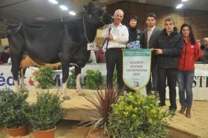 Réserve Grande Championne, Galfa-Vray (Minister x Jasper) au GAEC Vray-Holstein