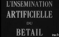 archive-activite-laitiere-6