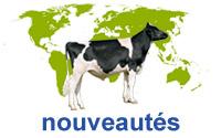 nouveautés-interbull-jeunes-taureaux