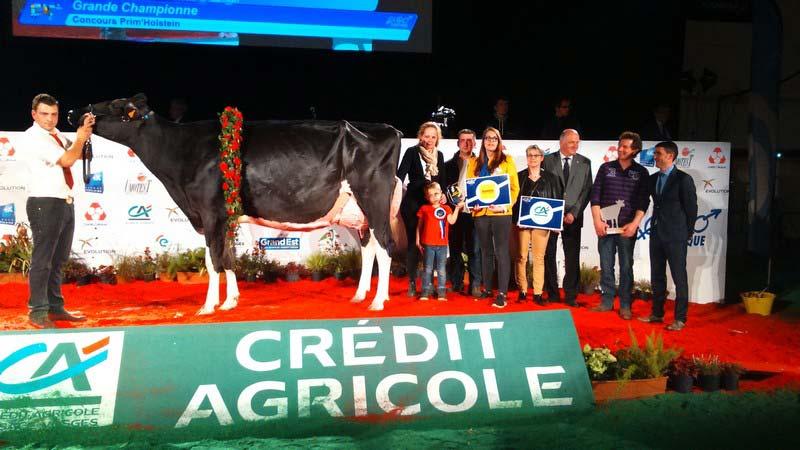 Grande Championne, Eurogénétique2017 : Goldblack du Tombuy